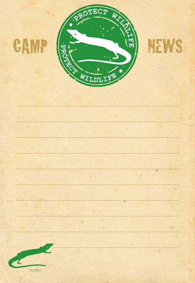 stationery - camp news (wildlife)