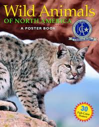 poster-book-wild-animals